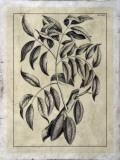 Embellished Antique Foliage III