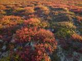 Autumn-Hued Tundra of Kronotsky Nature Reserve