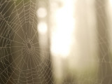 Backlit View of Part of a Spider Web
