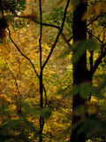 Grape Vines and Trees in Autumn Hues