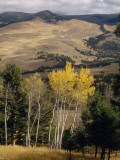 Beyond Evergreens and Aspens  Grasslands Slope North to Yellowstone's Buffalo Plateau