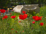 Poppies Grow around an Ancient Ionic Capital Near the Benaki Museum