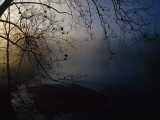 Fog and Silhouetted Trees at Sunrise on the Little Tennessee River