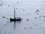The Shaint Islands are Breeding Grounds for Seabirds