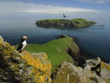 The Shaint Islands are Breeding Grounds for Puffins and Razorbills