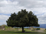 A Tourist Sits under a Tree Near the Ruins of Monte Alban
