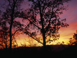 Silhouetted Tree and Blazing Sky at Sunset over Blue Ridge Mountains