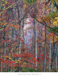 Glowing Autumn Forest  Virginia