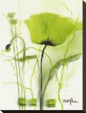Coquelicot Vert II Tableau sur toile par Marthe