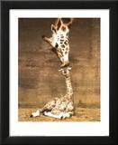 Girafe - Premier baiser Reproduction laminée et encadrée par Ron D'Raine