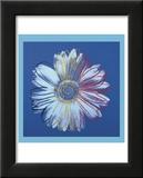 Daisy, c.1982  (blue on blue) Reproduction laminée et encadrée par Andy Warhol