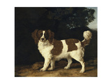 Fanny  the Favourite Spaniel of Mrs Musters  Standing in a Wooded Landscape  1777