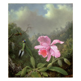 Still Life with an Orchid and a Pair of Hummingbirds  C1890S