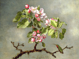 Apple Blossoms and a Hummingbird  1875