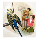 B Is for Budgerigars  Illustration from 'Treasure'