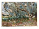 Landscape  Corfu  1909