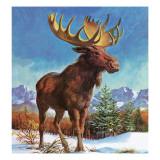 Alaska's Mighty Moose