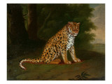 A Leopard in a Landscape