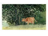 Cow in Pasture  1878