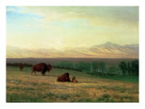 Buffalo on the Plains  C1890
