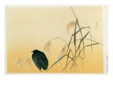 Blackbird  Edo Period