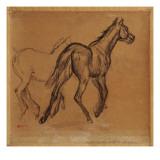 Horses  C1882