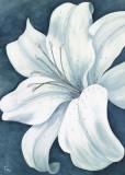 Wistful Lily I