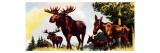 A Gang of Elks