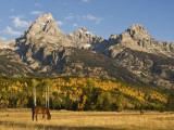 Horses and the Teton Range