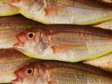 Fish for Sale at Tsukiji Fish Market