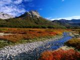 Lenga (Nothofagus) in Autumn Colours  Laguna Jakob