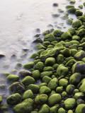 Algae-Covered Boulders on Beach
