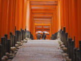 Orange-Red Gates (Tori) Lining Pathways of Fushimi-Inari-Taisha Shrine