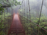 Cost Rica Monteverde Eco Tourism Canopy Walkway in Cloudfores