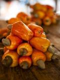 Caju or Cashew Fruit