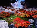Autumnal Foliage Beneath the Glacier Piedras Blancas