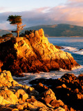 Cypress Tree in Coastal Cliff