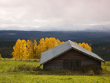 Traditional Wooden Barn  Yellow Aspens and Fjells with First Snow in Autumn