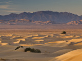 Cadiz Dunes at Sunrise  Sheephole Mountains in Distance in Mojave Desert