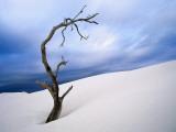 Dead Tree in Delisser Sandhills