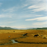 Horses Roaming in a Field  Andes