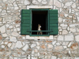 Dog in Window of House in Stari Grad Village