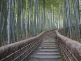 Escalier à travers la forêt de bambous au-dessus du temple de Adashino Nembutsu-Ji, Japon Papier Photo par Brent Winebrenner