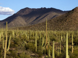West Unit of Saguaro National Park