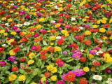 Colourful Flowers at Ho Chi Minh City's Zoo and Botanic Gardens