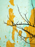 Detail of Tree Branch Against Wall with Peeling Paint