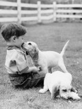 Little Boy Sitting in Grass With One Setter Puppy Licking Face and Another Lying in Grass
