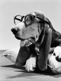 Basset Hound Wearing Spectacles