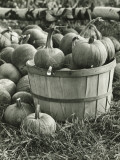 Basket of Pumpkins in Field