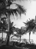 Palm Trees at Beach